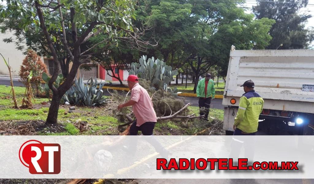Gobierno de Morelia brinda mantenimiento a las áreas verdes de Morelia