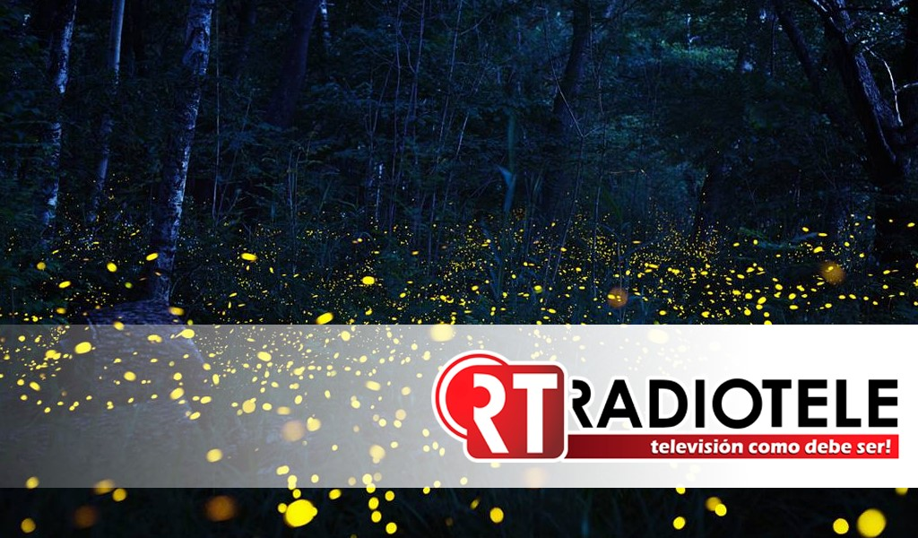 Festival de luciérnagas en el bosque esmeralda