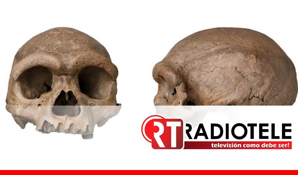"""Científicos chinos encuentran cráneo del """"hombre dragón"""" nueva especie hermana del Homo sapiens"""