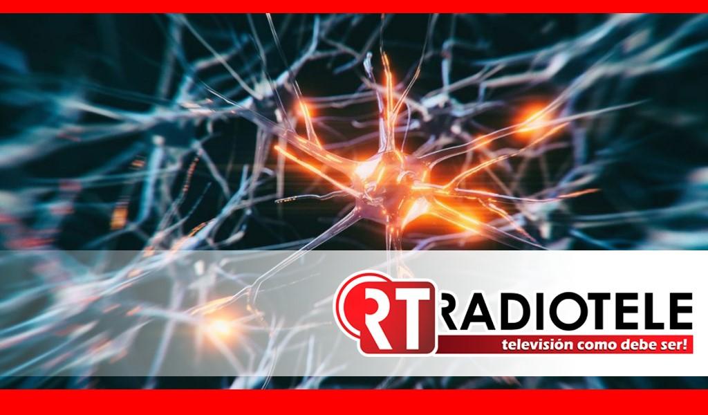 """Científicos descubren nuevas neuronas, """"las neuronas de la abuela"""""""