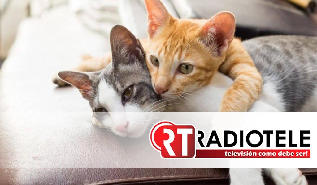 Protege la vida de tu gato de pulgas, garrapatas, gusano de corazón y otros parásitos intestinales