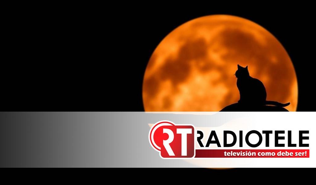 Suspenden adopción de gatos en Cd. Juárez por rituales de Halloween